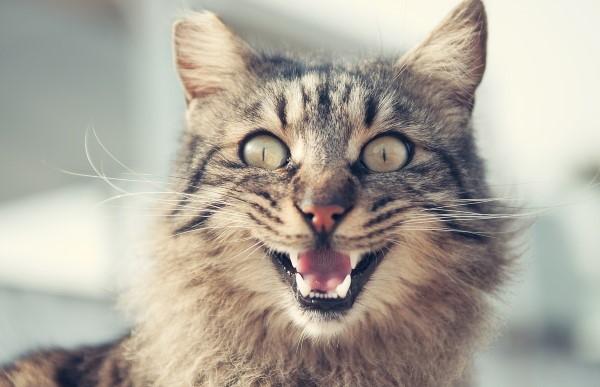 Katze mit Mykoplasmen