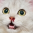 Katze mit Nasenbluten: Das kann dahinterstecken