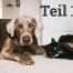 Symptome bei Hunden & Katzen, die oft unterschätzt werden