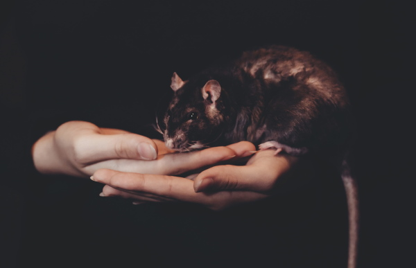 Rattengift bei Hund und Katze: Vergiftung